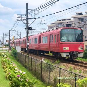 紫陽花と名鉄電車3500系3504F
