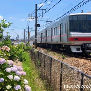 紫陽花と名鉄電車5000系トップナンバー