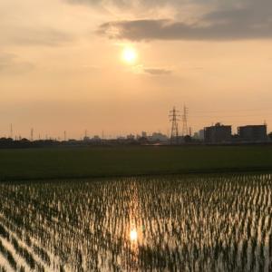 朝日に輝く水田と鉄塔
