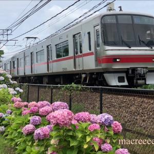 紫陽花とステンレスカー・名鉄5003F