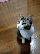 猫アレルギーの私が新築戸建て賃貸をペット仕様にする理由