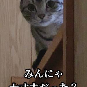 台風19号 お見舞い