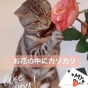 バレンタイン2020 つづき 【You Tube 動画】