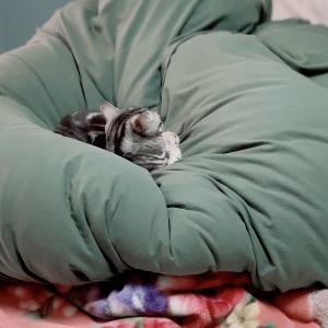 緊急事態宣言の日のねこ 緊急時愛猫対策2(ヘルプリスト)