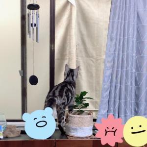 工事音にビビる猫・バトン用写真撮影