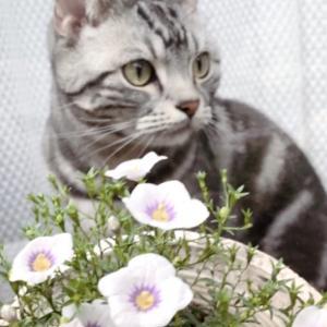 猫と花 留守番させて植物の楽園へ
