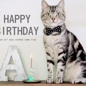 Happy Birthday アメオ5才誕生日。