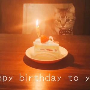 5才誕生日 猫動画