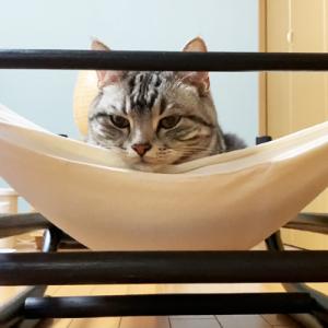 ハンモックが〇〇で大好きになっちゃった猫