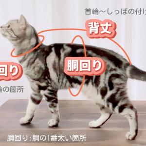 うちの猫のサイズ測ってみました。