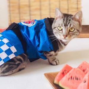 猫の夏祭り