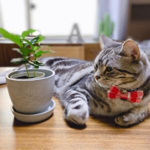 観葉植物と共に成長する?猫/  #エモい 【猫動画】