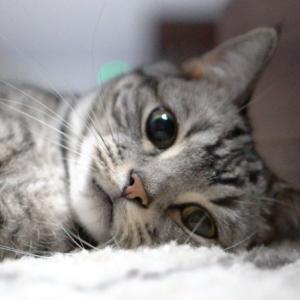 猫お留守番。 留守番の時の電気(照明)問題とか