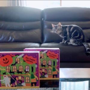 ハロウィン猫動画の裏側がチープすぎる・ハロウィン子供用のプレゼント