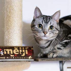 明治チョコ 猫デザインゲット!・Siriに嫉妬する猫
