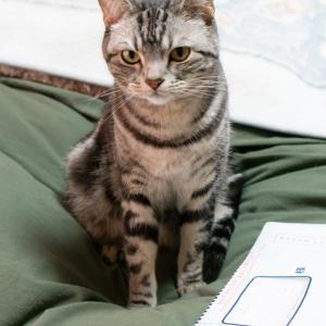 確定申告とか猫動画とか。寒がる猫・ネコの表情