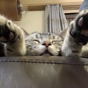 スーパーぱっさぱさな猫(同居人撮影)