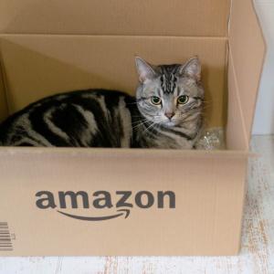 ストルバイトその後・ダンボール猫・賢い猫