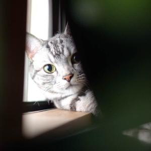 エアコン嫌いな猫/ 我が家の猫の飲水量の測り方…