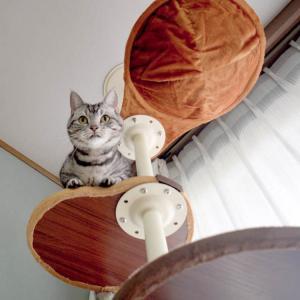 おしゃれなキャットタワー を組み立ててもらってご機嫌な猫