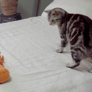 電動おもちゃ(ハニワ)にドン引きする猫 お詫び2点