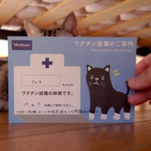 猫も人もワクチン。スイーツのお店の袋で遊ぶ猫