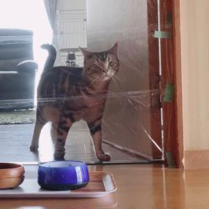 猫にサランラップどっきり仕掛けてみたら、意外な行動に出た!