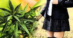 自宅アパート階段踊り場で大麻草栽培容疑 女子高生逮捕 新潟