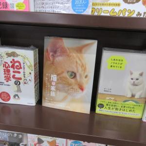 各書店にも行き届いてきました☆彡