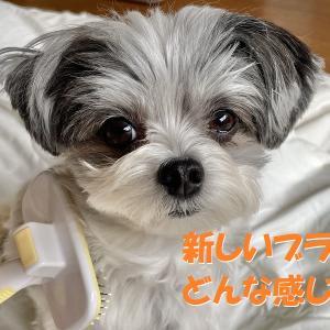 【ドギーマン】犬用ブラシの交換を実施。はたして…
