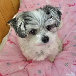 犬用ひんやりシートのメッシュマット。ひまりも暑さ対策へ。