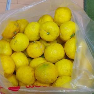 柚子貰いました(^O^)