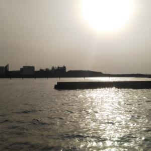 河口でウキ釣り(*´ω`*)