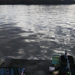 またまた河口で黒鯛狙い!