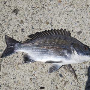 平塚新港で小魚に癒されてきました!