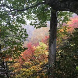 笹ヶ峰登山口から高谷池ヒュッテ目指して(2)火打山妙高山縦走2日間