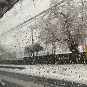 雪だったあ!