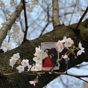 日本の神様カード今日の1枚/木花佐久夜毘売(このはなさくやひめ)