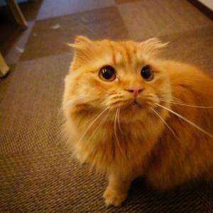 いつも猫のいいなりになってしまう