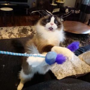 猫が、機嫌を直してくれた。ホッ