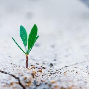 成長株長期投資<4年目>第117-155回チャートまとめ