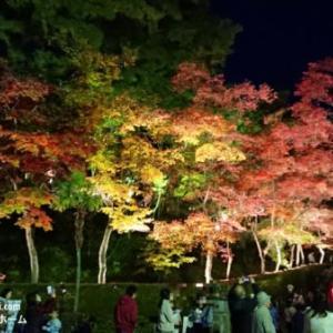 秋のリンクテラス【銀杏と紅葉とタイヤ交換】