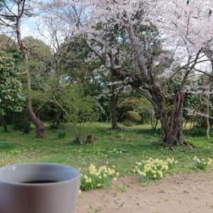 八分咲き桜「カフェテラスで田舎の自家製酵母パン」麦麦ベイク編