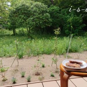 五月のリンクテラス「カッコウと桜の木陰」