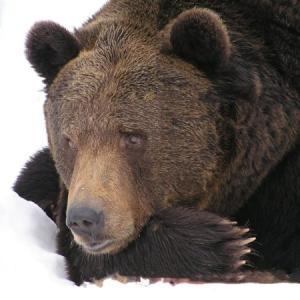 やっぱり、今度はクマがでたぁ!