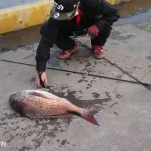 【動画】70センチ超「大真鯛」ついに姿をあらわした堤防の主!