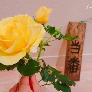 掃除当番とバラの花