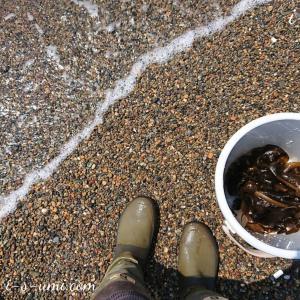 海沿い散歩「砂浜で海藻拾い」と「長靴の穴」