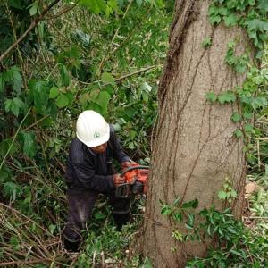 着工前ミッション「立木を伐採せよ」元きこり80歳父の腕と技