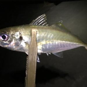 20センチクラスのアジを釣りに近所の河口へ